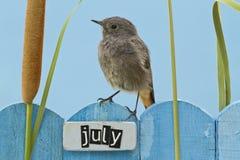 Fågel som sätta sig på ett Juli dekorerat staket royaltyfria bilder