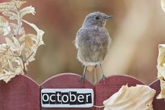 Fågel som sätta sig på ett Oktober dekorerat staket arkivfoto