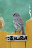 Fågel som sätta sig på ett September dekorerat staket royaltyfri bild