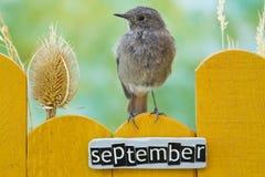 Fågel som sätta sig på ett September dekorerat staket arkivbild
