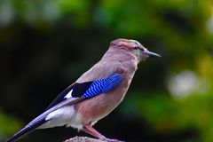 Fågel som sätta sig på ett trädgårds- staket arkivbild