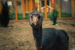 Fågel som ser in i kameran Arkivbilder