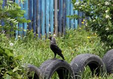 Fågel som sitter på gummihjulet royaltyfri foto