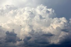 Fågel som skjuta i höjden bland moln Royaltyfri Fotografi