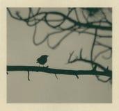 fågel som slås little Arkivbilder