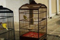 Fågel som solbadar i bur med mat- och drinkfotoet som tas i Jakarta Indonesien Arkivfoto