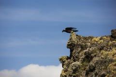 Fågel som tar av Royaltyfri Foto
