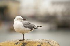 Fågel som tillbaka ser Arkivbild