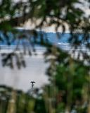 Fågel som torkar dess vingar på vattnet royaltyfria bilder