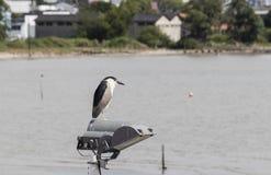Fågel som vilar på en lyktstolpe royaltyfria bilder