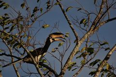 Fågel & träd royaltyfria bilder