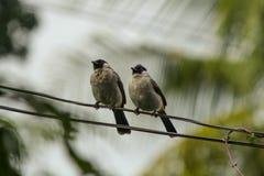 fågel två Fotografering för Bildbyråer