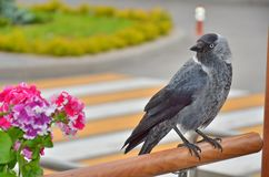 Fågelalika Arkivfoton