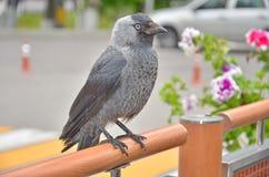 Fågelalika Royaltyfria Foton