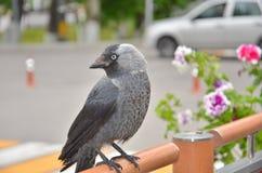 Fågelalika Royaltyfri Foto