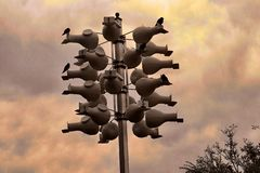 Fågelandelslägenheter i himlen royaltyfria foton