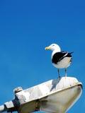 Fågelanseende på en fyr av ljus Fotografering för Bildbyråer