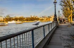 Fågelanseende på en räcke på bankerna av floden Fotografering för Bildbyråer