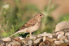 Fågelanseende på en sten Arkivfoto
