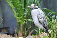 Fågelanseende på ett enkelt ben Arkivbild