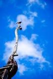 Fågelanseende på ett tak Royaltyfria Bilder
