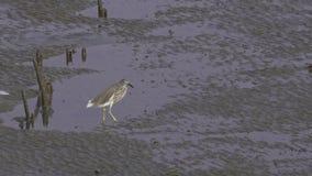 Fågelansträngning med det blåsigt arkivfilmer