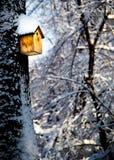 Fågelask i solen på trädet som täckas med snö Arkivfoto