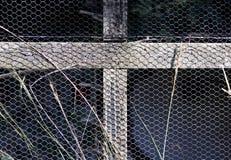 Fågelaviariumträ och ingrepp Royaltyfri Bild