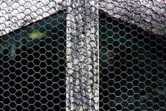 Fågelaviariumträ och ingrepp Arkivbild