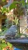 Fågelbadförlagematare Royaltyfria Foton