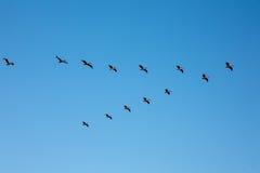 Fågelbildande Arkivfoto