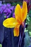 fågelblommaparadis Arkivfoton