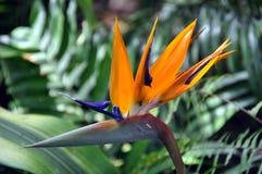fågelblommaparadis Arkivbild