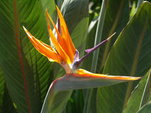 fågelblommaparadis royaltyfri fotografi