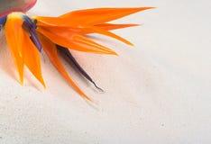 fågelblommaparadis Fotografering för Bildbyråer