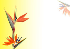 fågelblommaparadis Arkivbilder