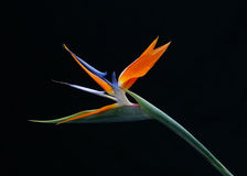 fågelblommaparadis royaltyfri bild