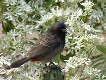 fågelblomningar Arkivfoton