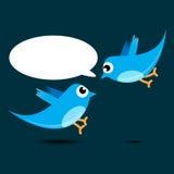 fågelblue två royaltyfri bild