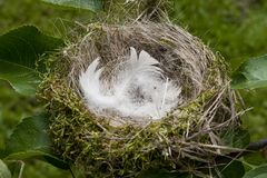 Fågelbo - en synonym för ett hemtrevligt hus, lägenhet Fotografering för Bildbyråer