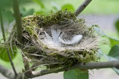 Fågelbo - en synonym för ett hemtrevligt hus, lägenhet Royaltyfria Foton