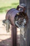 Fågelbo i metallcan Fotografering för Bildbyråer
