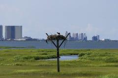 Fågelbo i träsken med staden i bakgrunden Fotografering för Bildbyråer