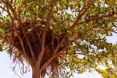 Fågelbo på trädet i trädgården arkivbild