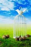 Fågelbur och hasselnötter på den gröna fantasiängen Arkivbild