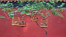 Fågelburar med sångfåglar hänger på ett träd i ett kinesiskt parkerar royaltyfria bilder