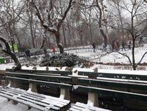 FågelCentral Park vinter Arkivbild