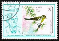 FågelDendroicapityophila Delpinar Bijirita, serie`en den 90th årsdagen av döden av Juan C Gundlach ` circa 1986 Fotografering för Bildbyråer