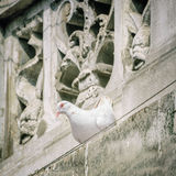 Fågelduva på taklägga Fotografering för Bildbyråer