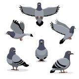 Fågelduvan poserar tecknad filmvektorillustrationen Arkivfoto